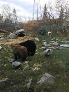 Bears!!
