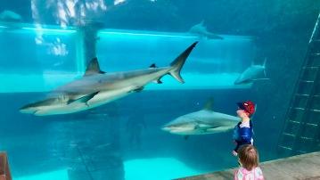 Tube slide thru shark tank